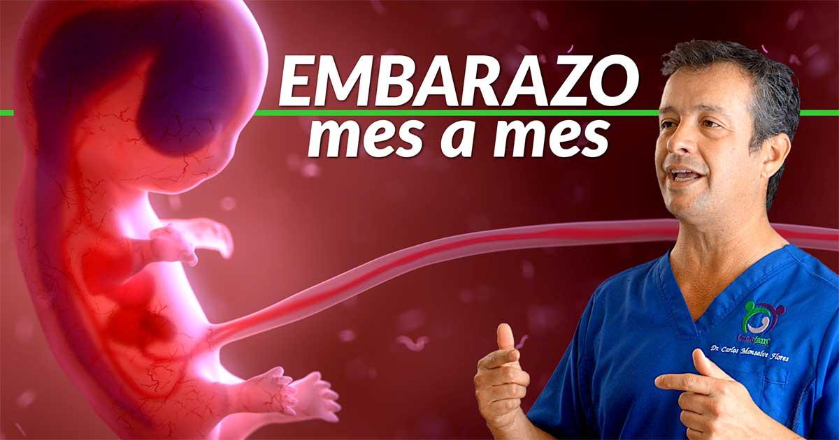 Embarazo mes a mes, desarrollo embrión, feto, bebé.